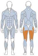 Picture of Hamstrings